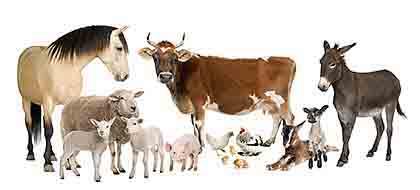 Animales Domesticos - Perito de Animales