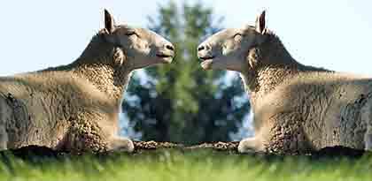 Clonacion de Animales - Alteracion Genetica