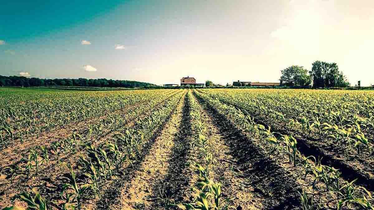 Agricultura - Industria Agroalimentaria