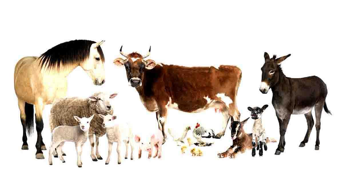 Perito en Animales Domésticos. Características, cuidado