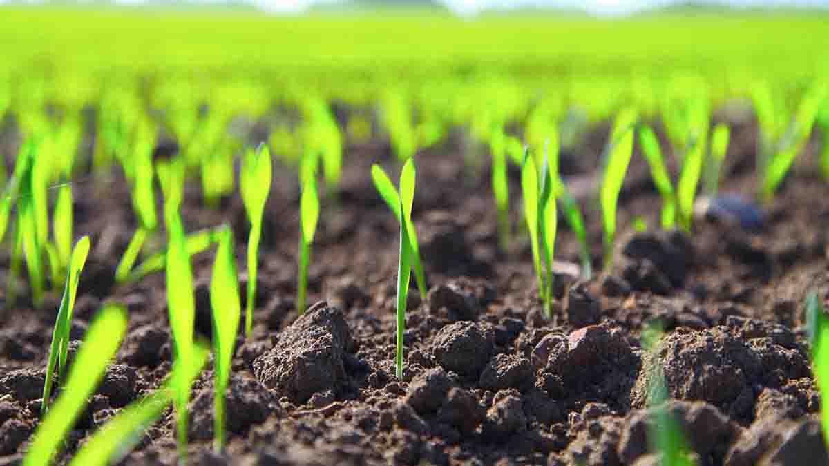 Perito en Cultivos: adecuación, productividad, terrenos