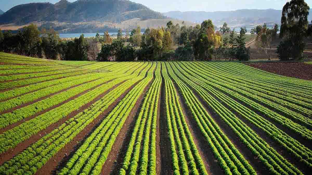 Perito en Finca Agrícola, valoración de daños producidos