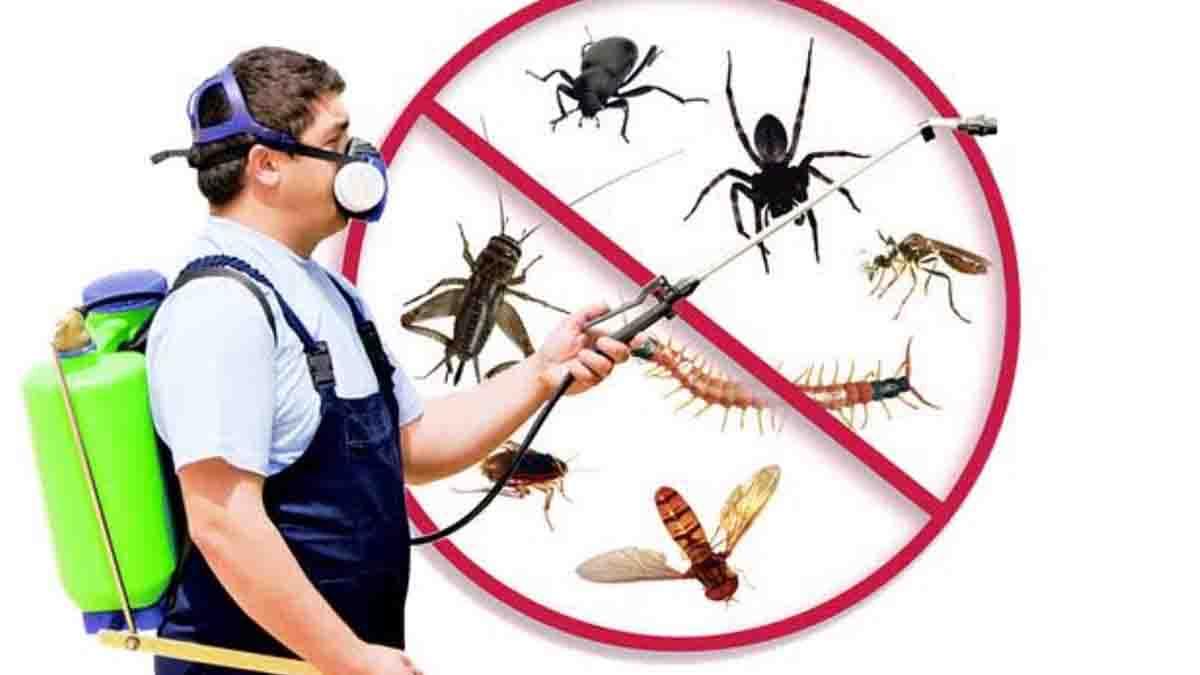 Perito Fumigación y eliminación de plagas. Posibles efectos