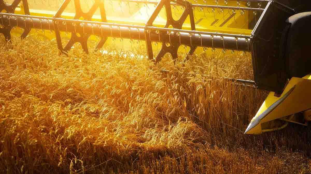 Perito en Seguro Agrícola - Agroseguro. Seguridad Social