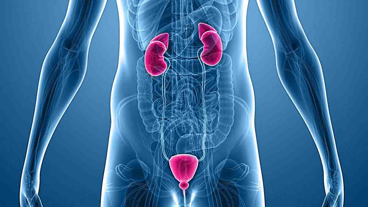 Perito Urólogo. Diagnóstico y tratamiento aparato urinario