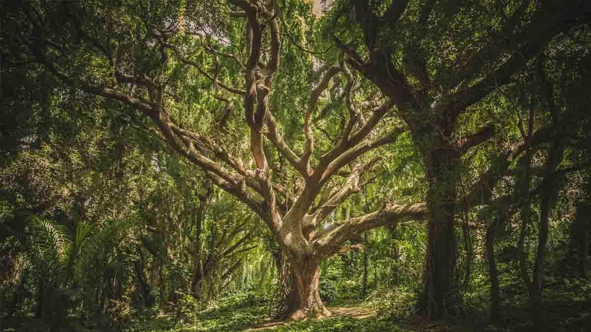 Perito en Árboles y maderas. Tasaciones y valoraciones