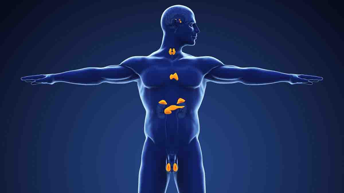 Perito en Endocrinología y problemas tiroides. Tratamiento