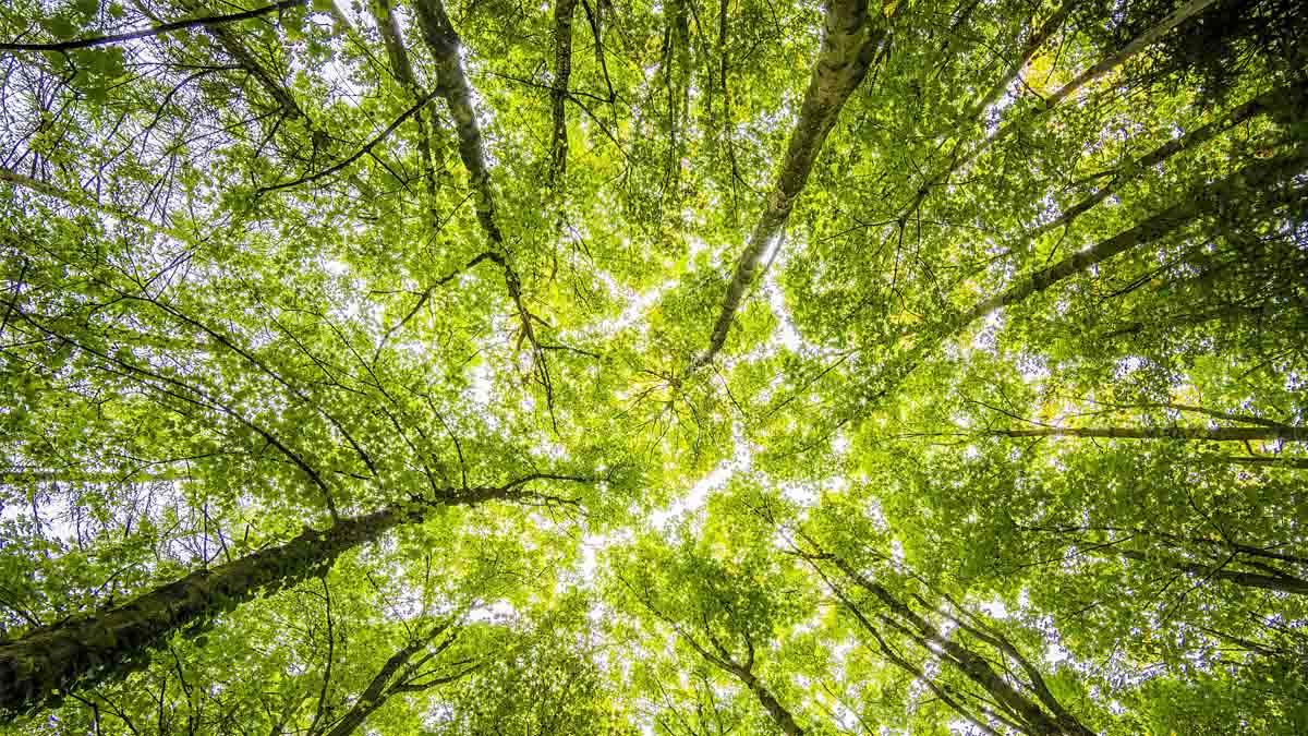Perito en Explotación Forestal y uso del medio ambiente
