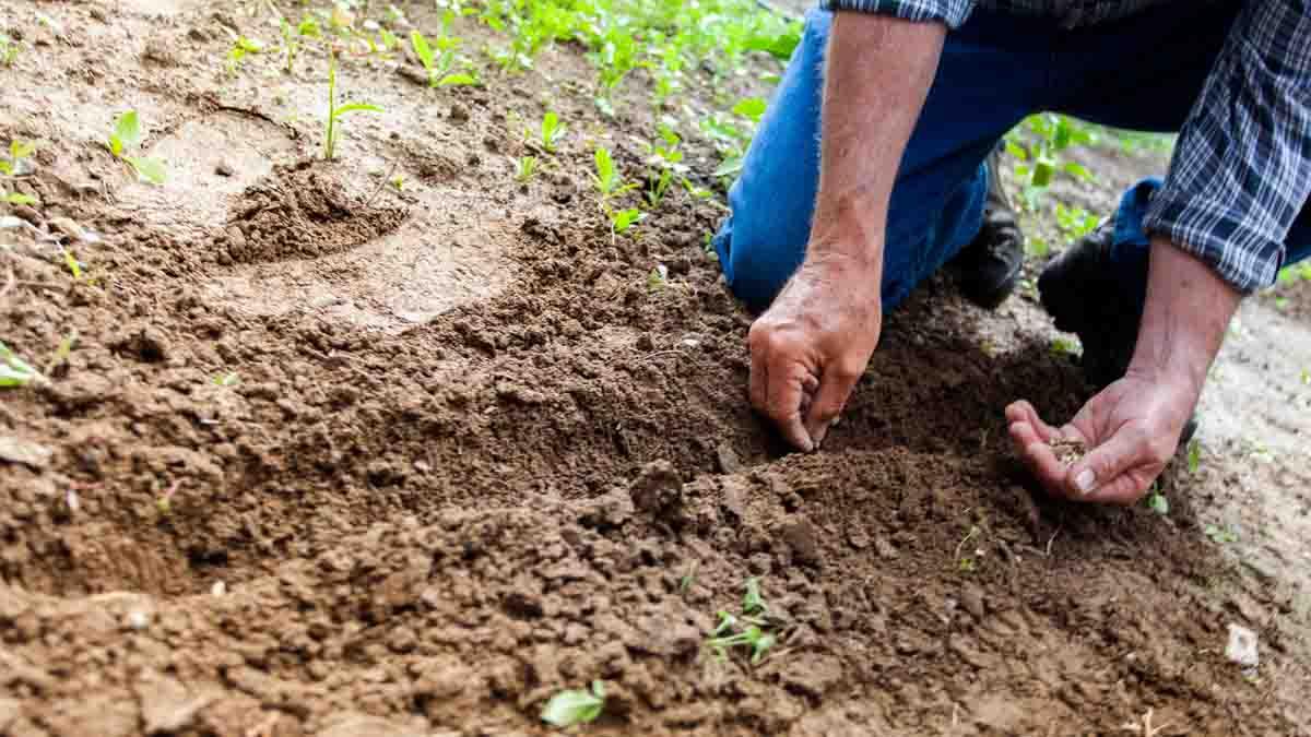 Perito en Jardinería: Creación, mantenimiento y daños