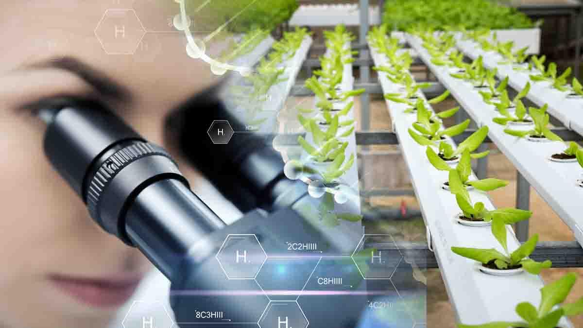Perito en Manipulación Genética de Plantas y mejora agraria