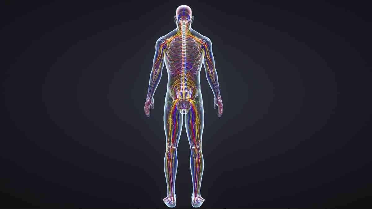 Perito en Neurología - Malapraxis tratamiento nervios