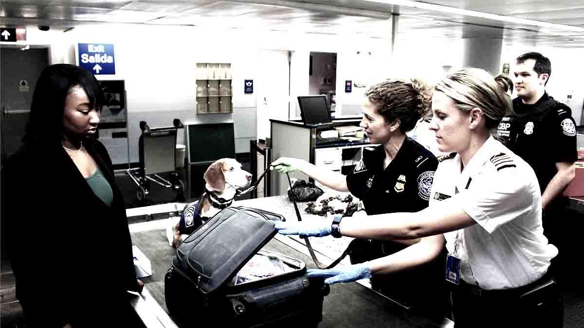 Perito en Orden de Registro, registro policía de propiedad