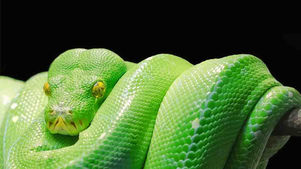 Perito en Reptiles y Anfibios. Contrabando, venenos