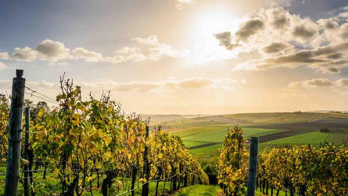 Perito en Viticultura y Enología. Análisis viñedos y vinos