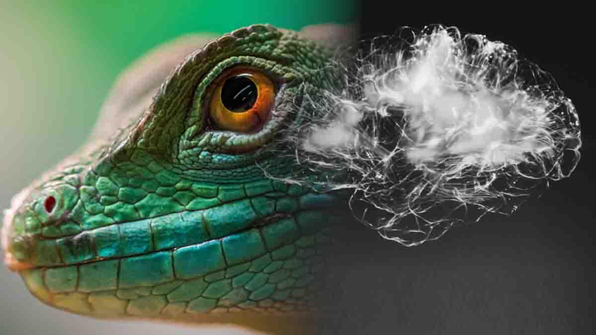 La Estrategia del Cerebro Reptiliano para ganar juicio