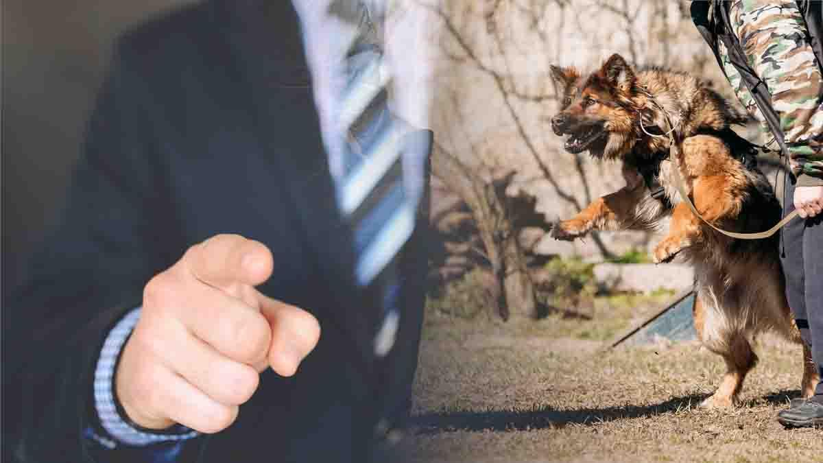 El Perito Cinológico, experto para resolver problemas con los perros