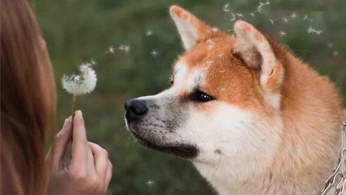 La Custodia compartida de mascotas y animales: Todo lo que necesitas saber