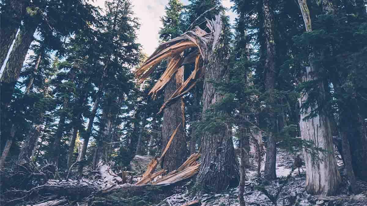 Daños por árboles, plantas, caídas, raíces: Todo lo que necesitas para reclamar