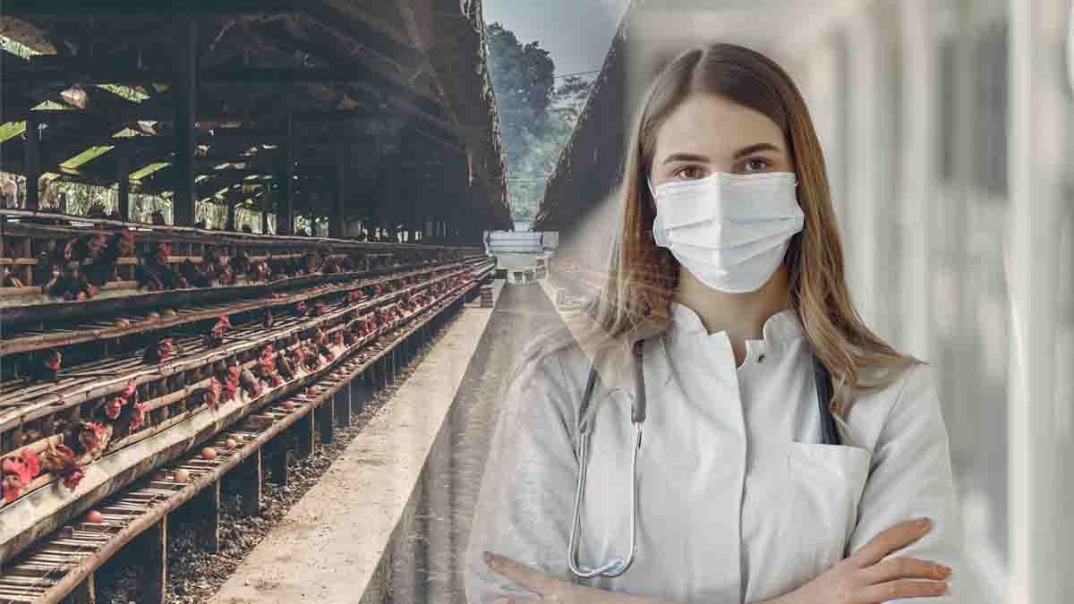 Inspección higiénico sanitaria y de bienestar animal en explotaciones